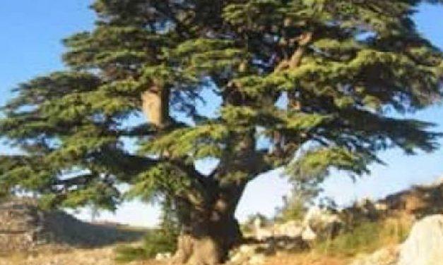 Le Liban, singulier et pluriel, singulier parce que pluriel